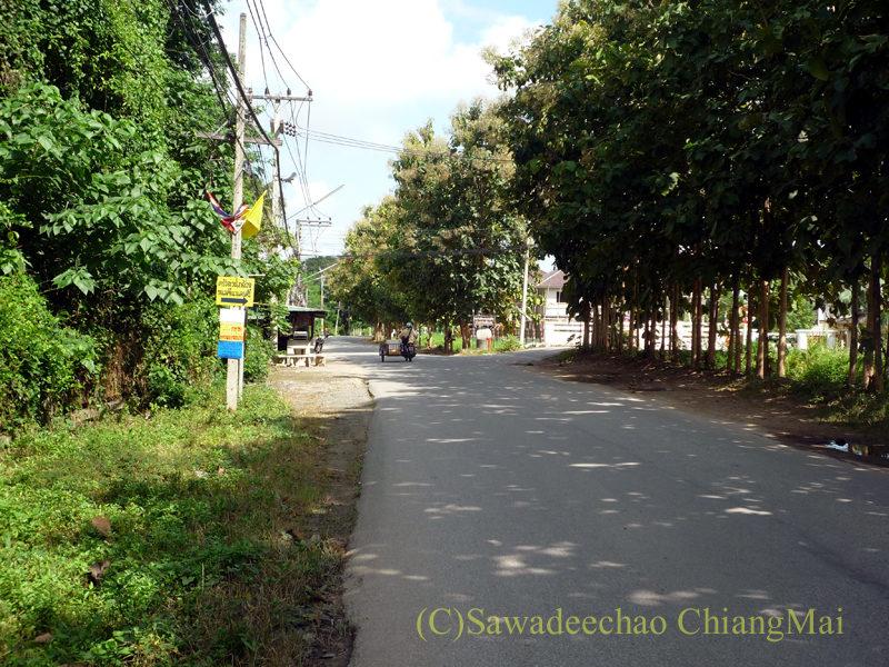 チェンマイ郊外のピン川左岸道路の並木道