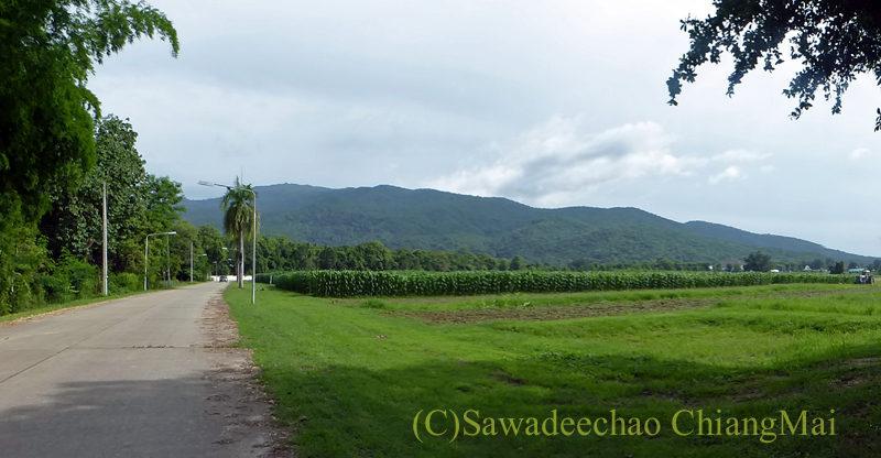 チェンマイ郊外の農村地帯