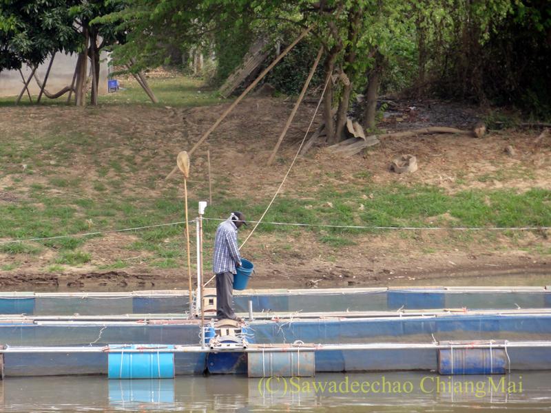 チェンマイのピン川に造られた養魚場でエサをまく人