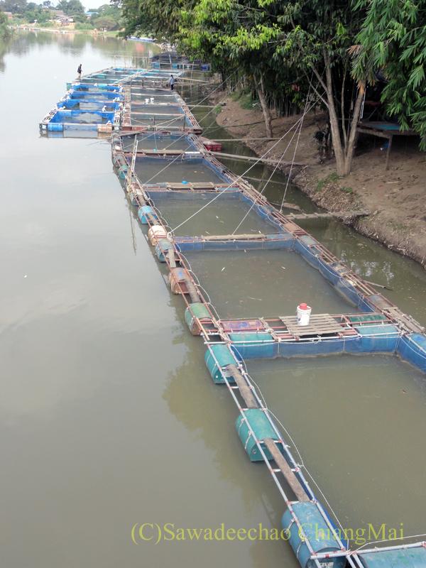 チェンマイのピン川に造られた養魚場の近景