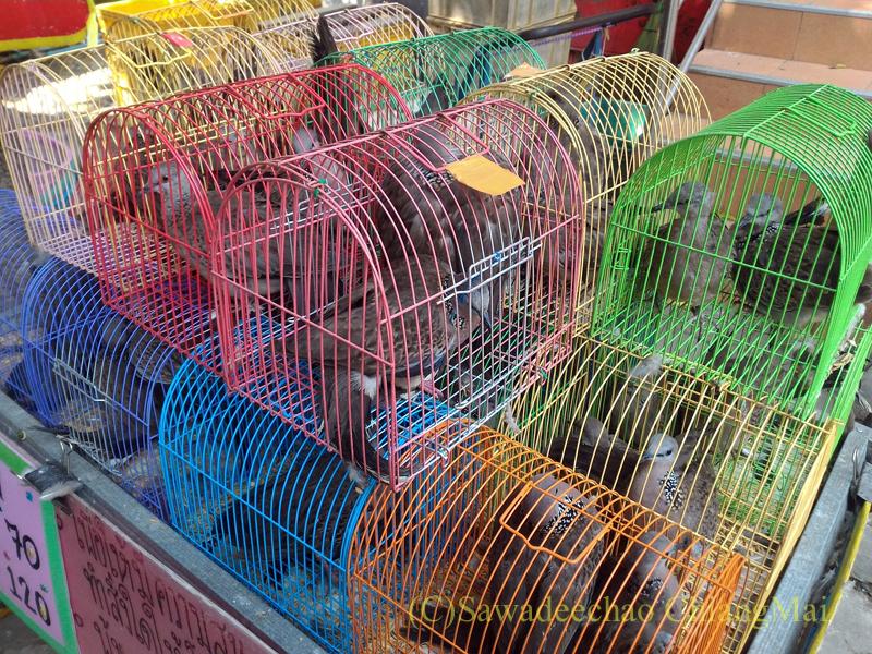 チェンマイのマーカブーチャー(万仏節)の日のワットチャイモンコンの境内の放生用鳥売場