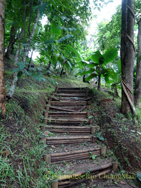 チェンマイ北部郊外にあるクイーンシリキット植物園のウォーキングコース