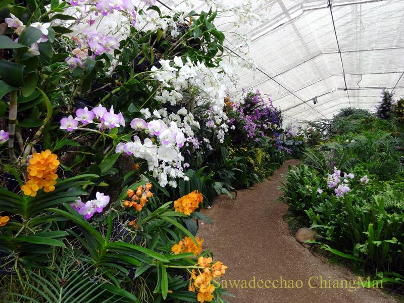 チェンマイ北部郊外にあるクイーンシリキット植物園の蘭温室