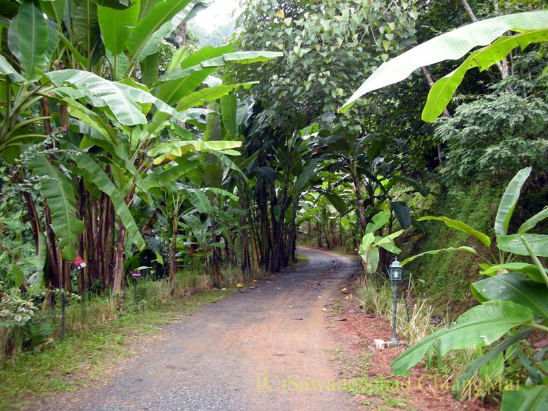 チェンマイ北部郊外にあるクイーンシリキット植物園の歩道