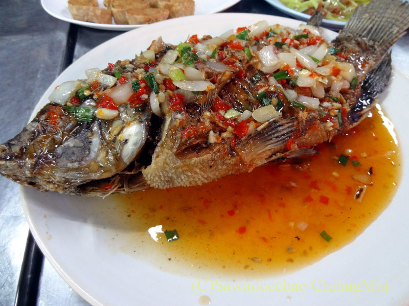 チェンマイの大衆中華レストラン、ティパロット(味露飯店)のティラピアの丸揚げ唐辛子あんかけ