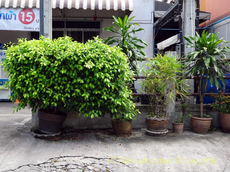 チェンマイの自宅近くに置かれている植木鉢