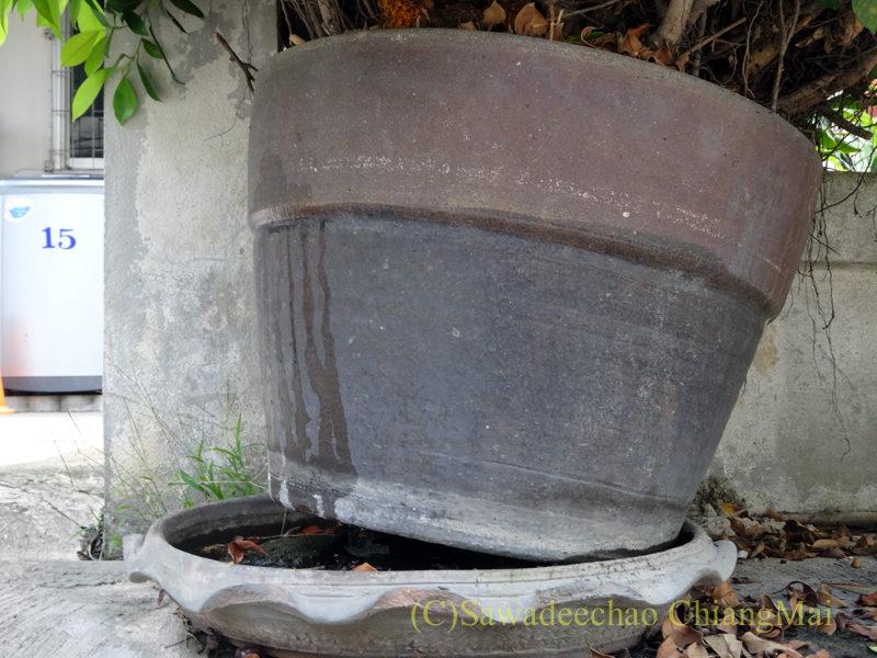 チェンマイで見た、木が伸びすぎて傾いている植木鉢