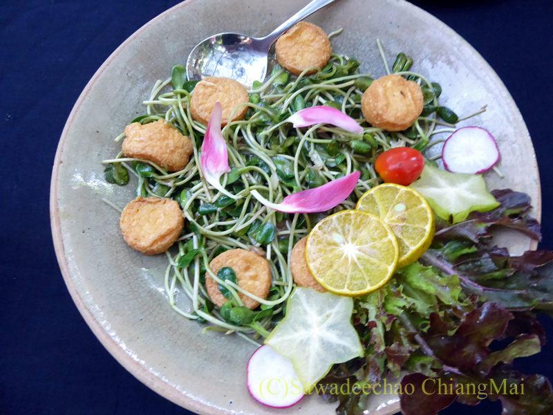 チェンマイの人気創作タイ料理レストラン、ミーナーライスベイストキュイジーヌの豆苗と豆腐の卵炒め