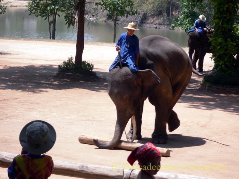 タイのラムパーンにある国立象保護センターのエレファントショーで丸太を転がす象