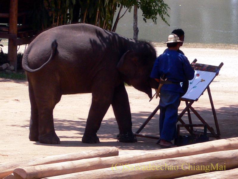 タイのラムパーンにある国立象保護センターのエレファントショーで絵を描く象