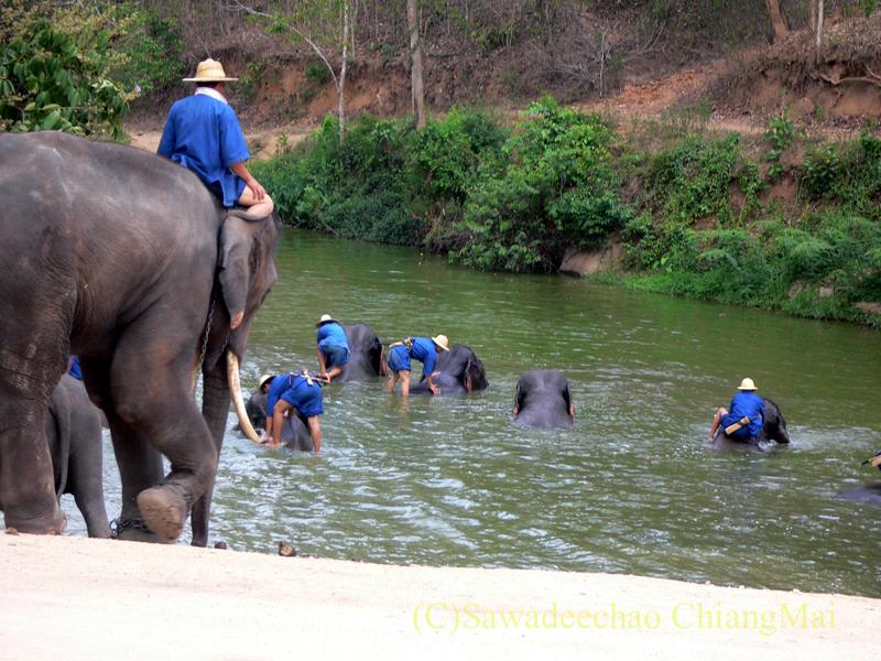 タイのラムパーンにある国立象保護センターの象乗りの池