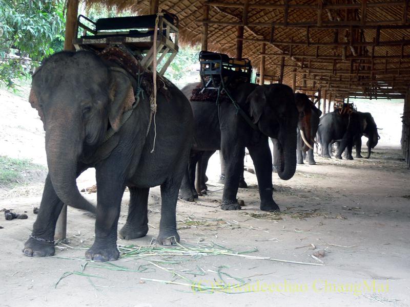 タイのラムパーンにある国立象保護センターの象乗り場
