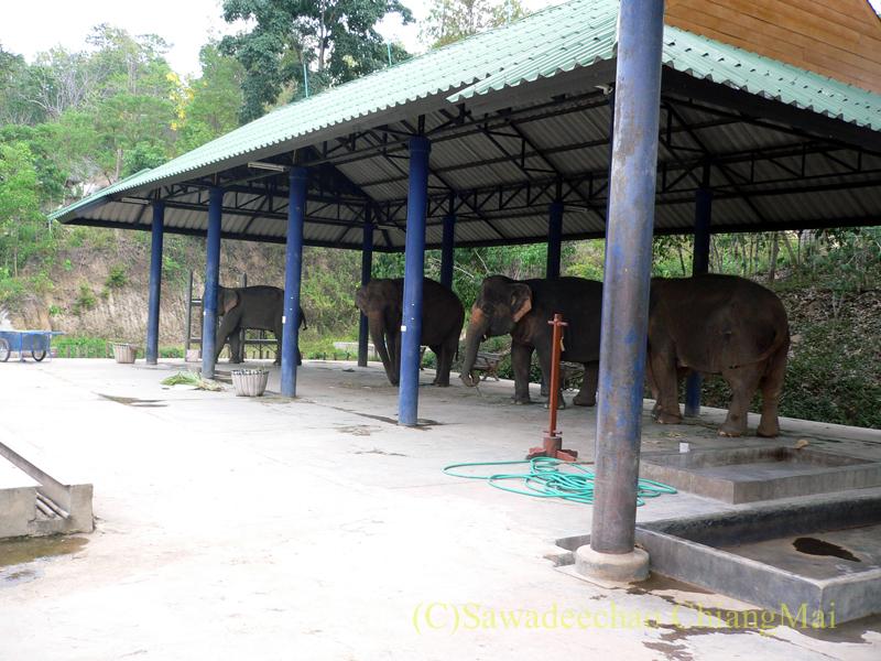 タイのラムパーンにある国立象保護センターの象病院の隔離病棟