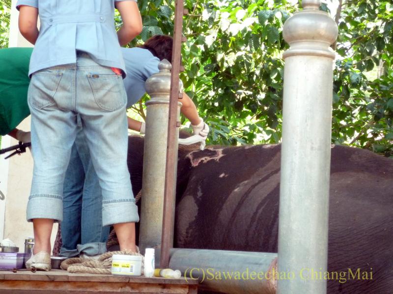 タイのラムパーンにある国立象保護センターの象病院のけがをした象