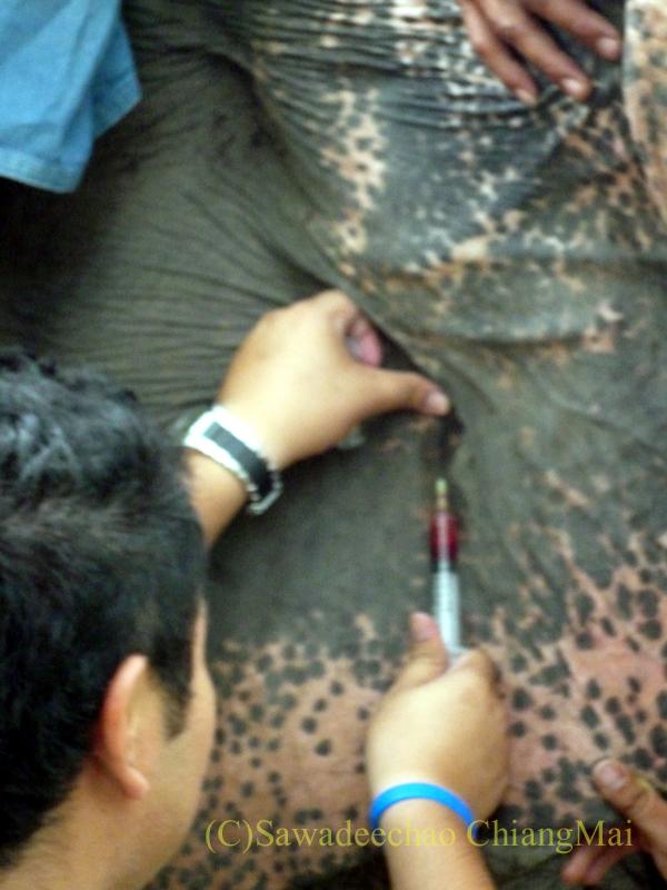 タイのラムパーンにある国立象保護センターの象病院での注射