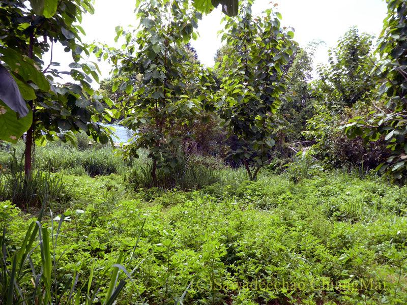 チェンマイのウィアンクム・カーム遺跡のピン川の跡