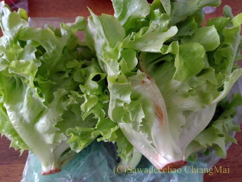 チェンマイのロイヤルプロジェクトショップで購入したサラダ菜