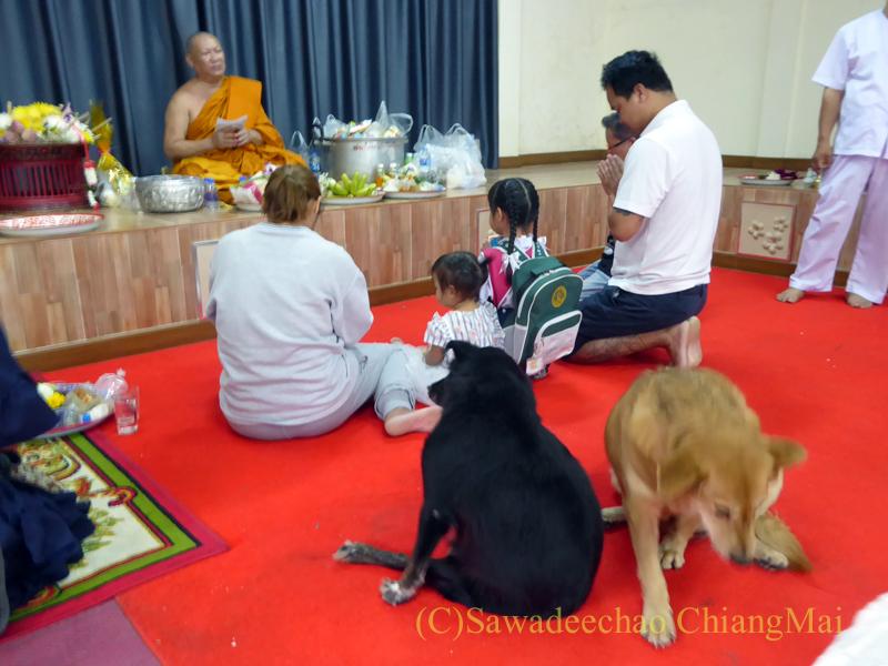 チェンマイにある寺院ワットパーペーンのオークパンサーの日の堂内の犬