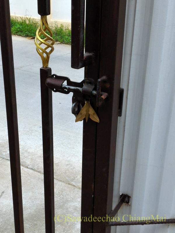 チェンマイの自宅の門扉と木の葉に擬態した蛾
