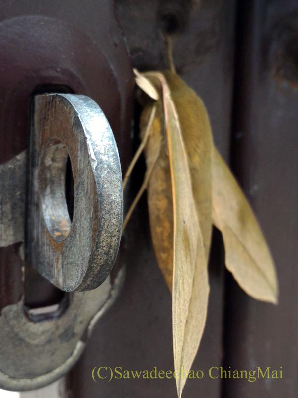 チェンマイの自宅の門扉にいた木の葉に擬態した蛾の脚