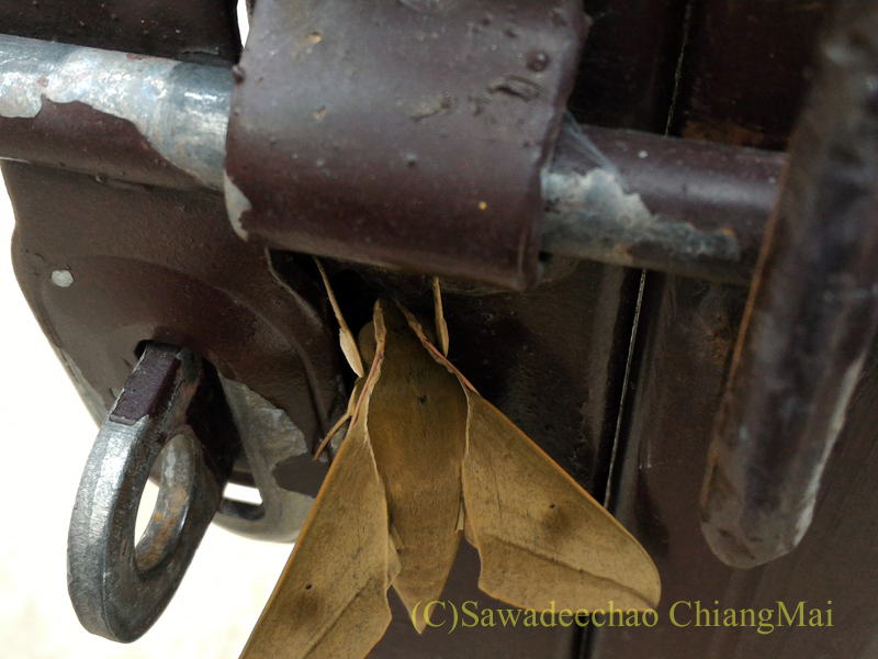 チェンマイで見た見事に木の葉に擬態した蛾