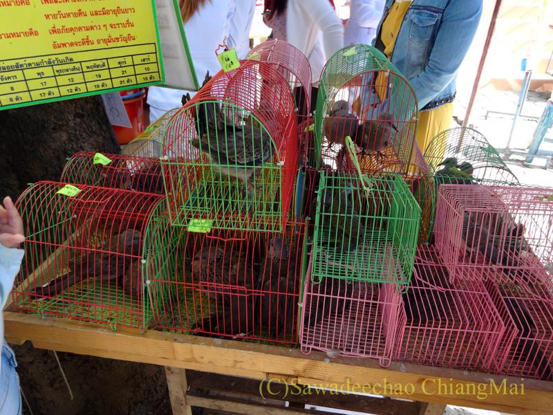 ウィサカブーチャの日のチェンマイのワットチャイモンコンの放生用の鳥カゴ
