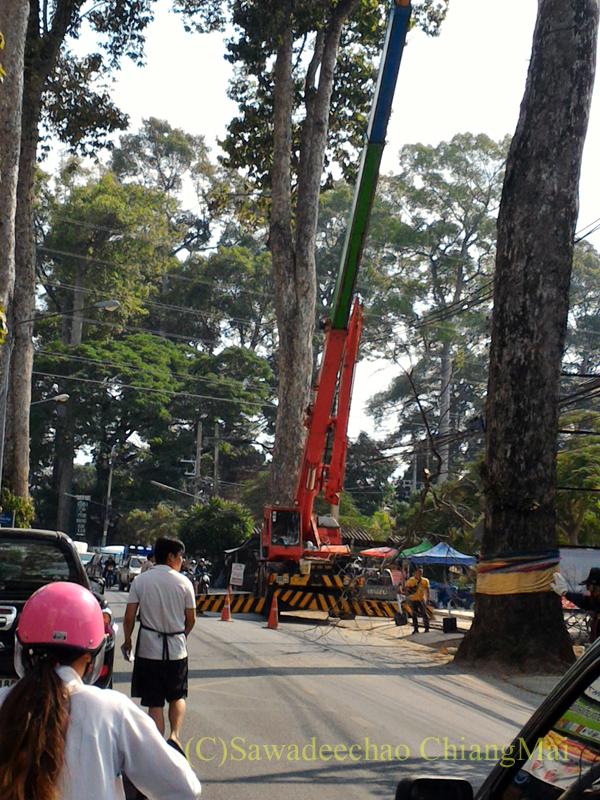 チェンマイ-ラムプーン街道でのヤーンの巨木の剪定をするクレーン車