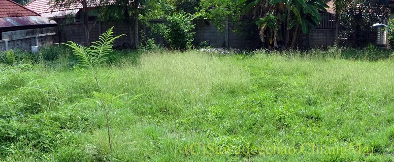 チェンマイ北部郊外の庭が広い一戸建ての庭概観