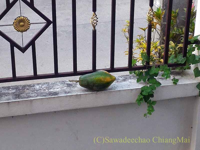 チェンマイの自宅の塀の内側に置かれた謎のパパイヤ
