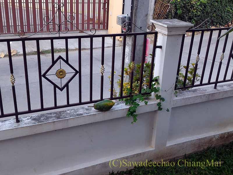 チェンマイの自宅の塀とパパイヤ