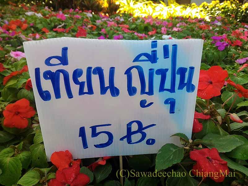 チェンマイ市内北部にあるカムティエン市場で買ったインパチェンス