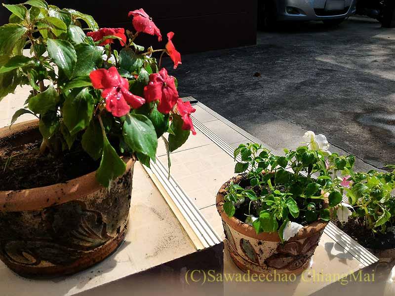 チェンマイの一軒家のエントランスのプランターの花