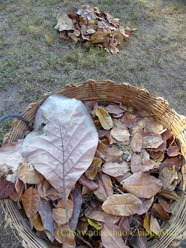 チェンマイの自宅の庭に落ちた大量の葉っぱを集めてかごに入れる