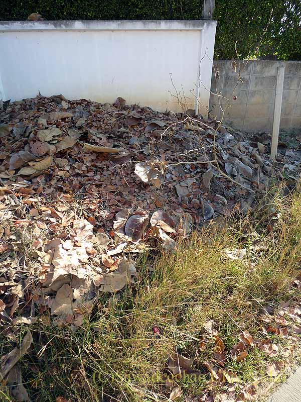 チェンマイの自宅の庭に落ちた大量の葉っぱを捨てる空き地