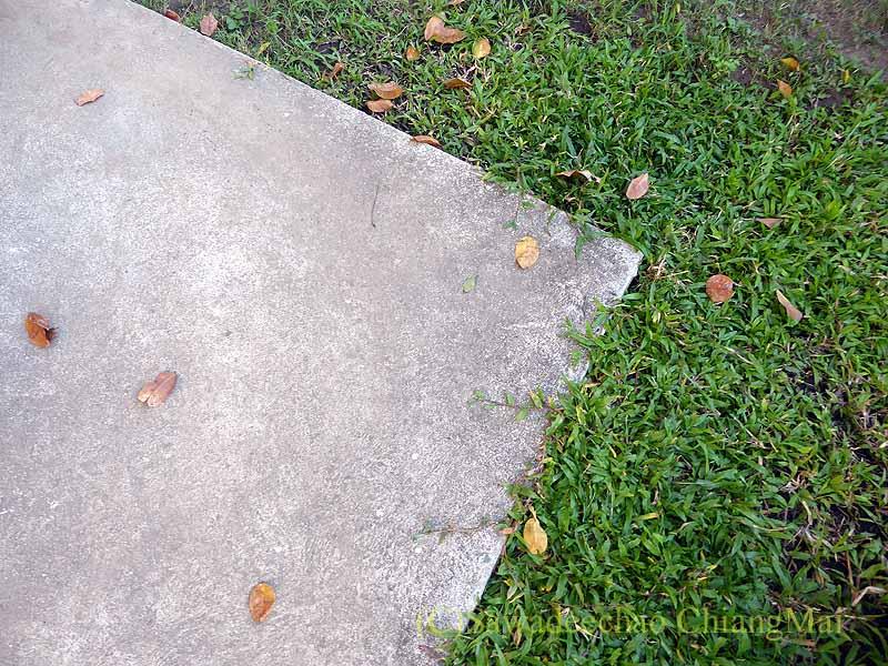 チェンマイの自宅の通路に裏の家から落ちた葉っぱ