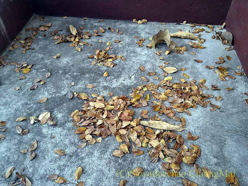 チェンマイの自宅のガレージに裏の家から落ちた大量の葉っぱ