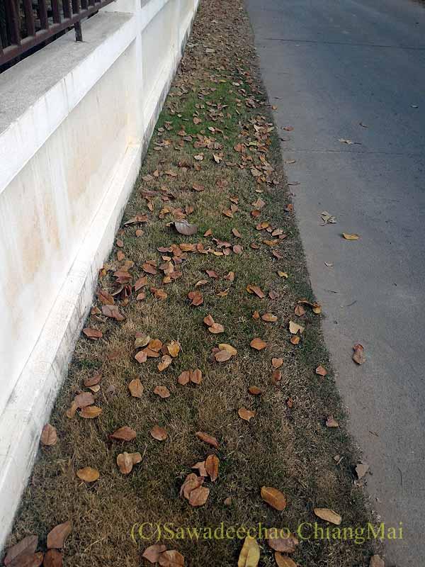 チェンマイの自宅の道路脇に裏の家から落ちた大量の葉っぱ