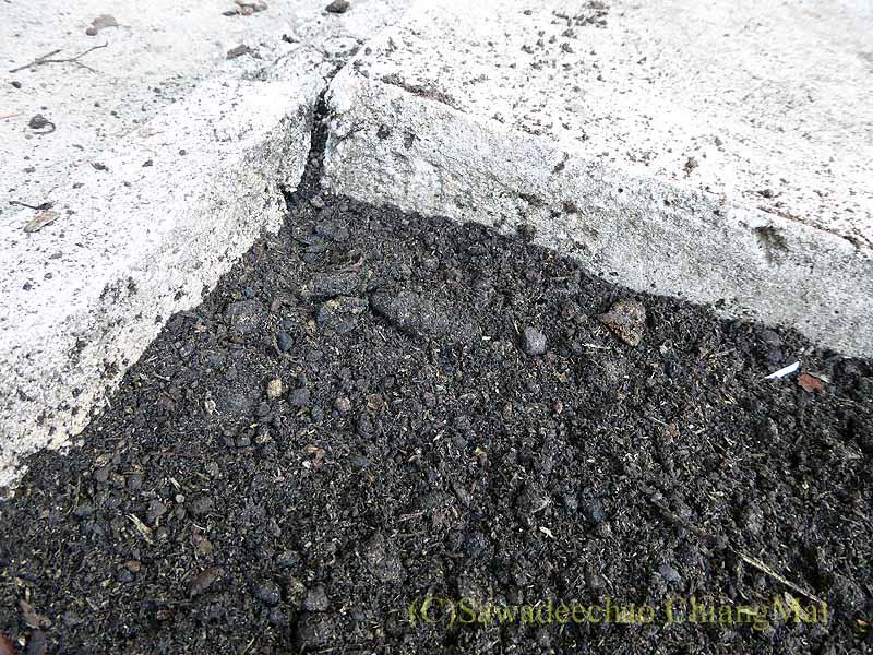 チェンマイの自宅の庭に開いた蛇の穴に土をかぶせる