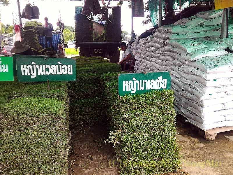 チェンマイのカムティエン草木市場の芝生屋