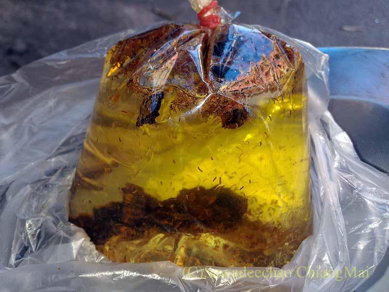 チェンマイの寺院での厄祓いの儀式でもらった聖水